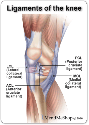 Knee Ligament Injury Anatomy